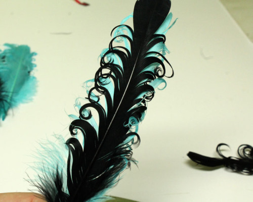 black-and-turq-feather