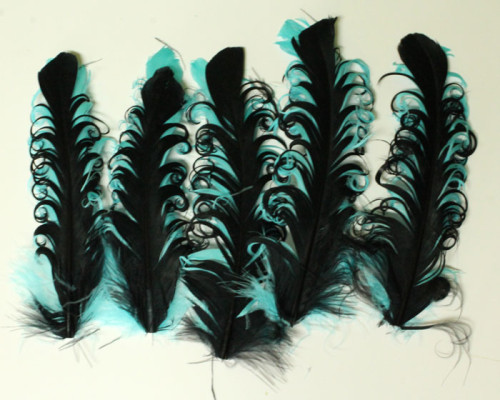 finished-group-feather